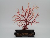 血赤珊瑚拝見 (1)